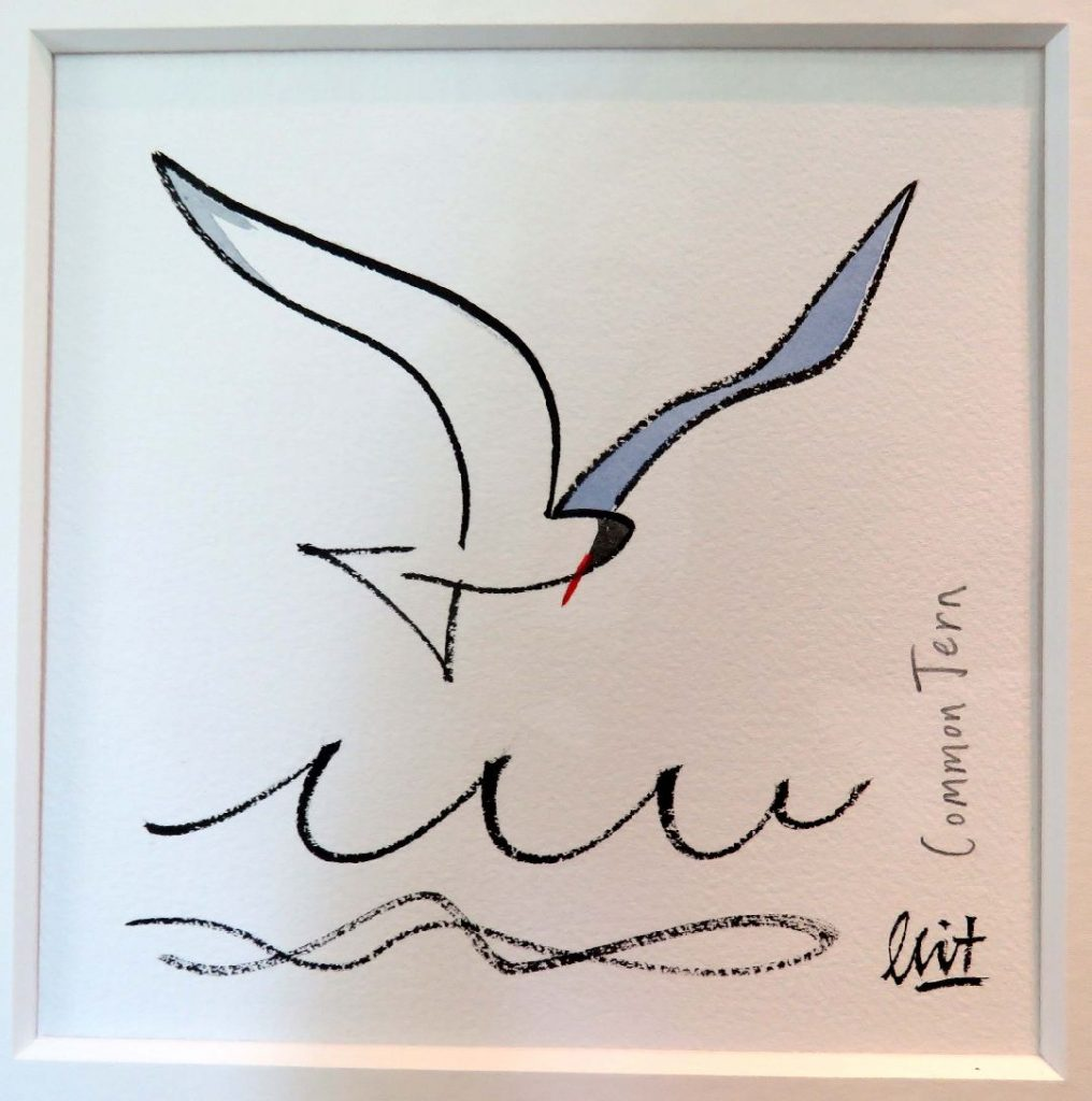 7.limited edition fine art print – Common Tern – £40 each mounted