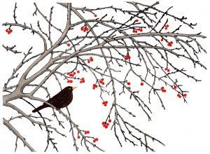 Winter Berries half