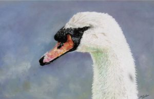 rsz_1mute_swan_cards_2